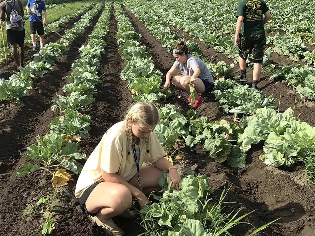 Multiple students crouched down in a garden tending to lettuce plants